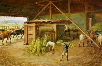 Die Geschichte des Zuckerrohrs